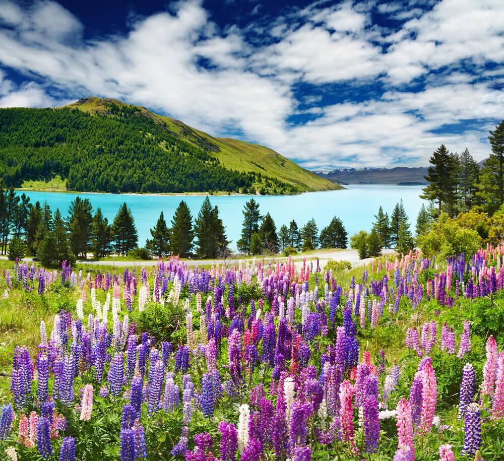 A beautiful picture of Lake Tekapo, New Zealand scenery.