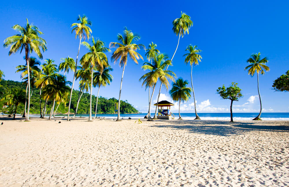 A picture of a sandy beach in Maracas Bay. You can see the ocean in the distance and palm trees overhanging.
