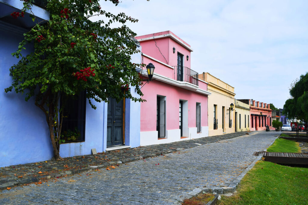 A row of historic traditional houses in Colonia Uruguay net to a cobbled roadway. The houses are painted different colours including blue, pink, yellow, and red. There is a tree with brightly colored red flowers in front of the blue house.