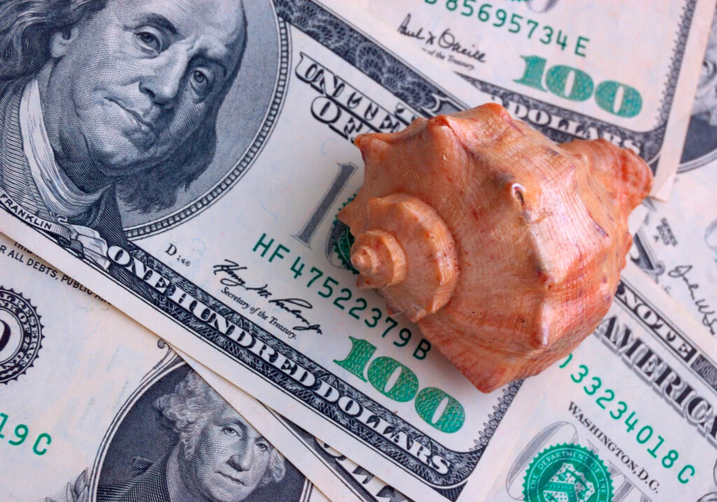An image showing a sea shell sitting on a pile of U.S. hundred dollar bills