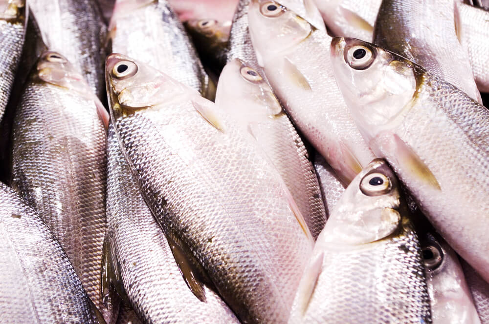 A picture of several milkfish at the market.
