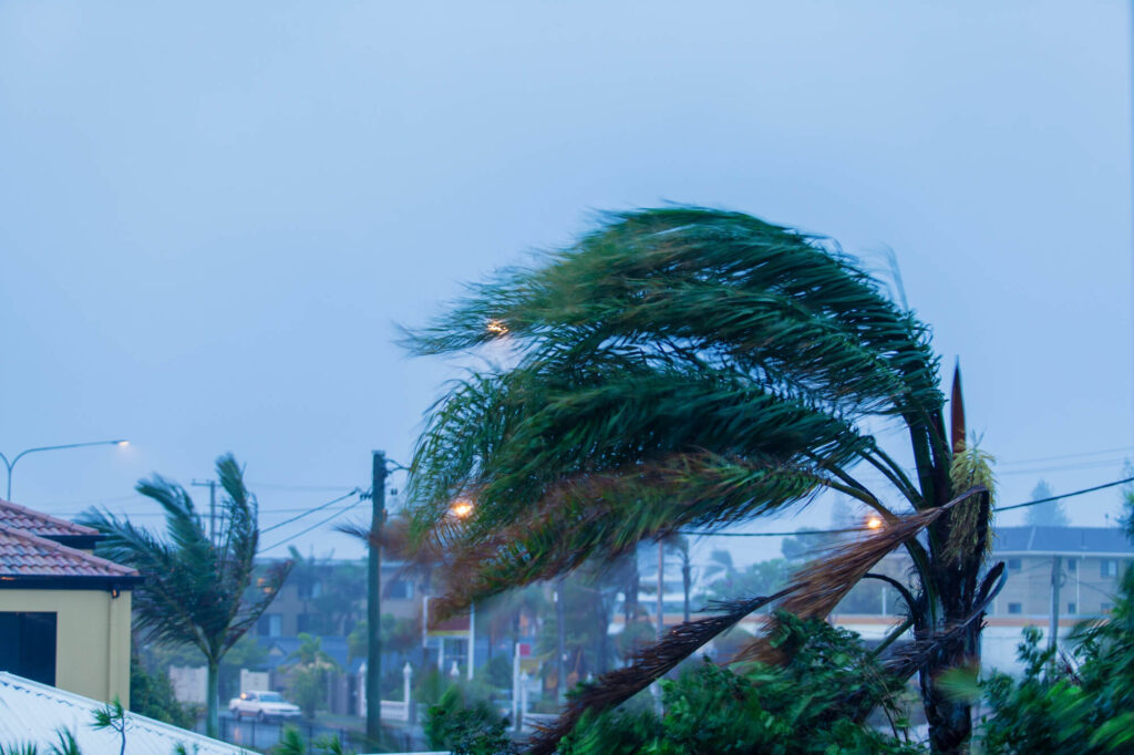 A photo showing a palm tree blowing in heavy wind caused by a cyclone