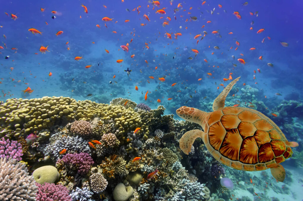 A photograph of the sea creatures near Bonaire, showing a turtlee and several fish swimming in crystal clear ocean water