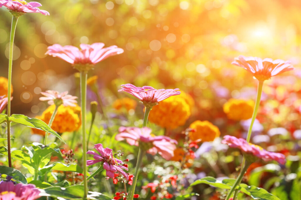 An abstract photograph showing a flower bed on a sunny day featuring red and yellow flowers