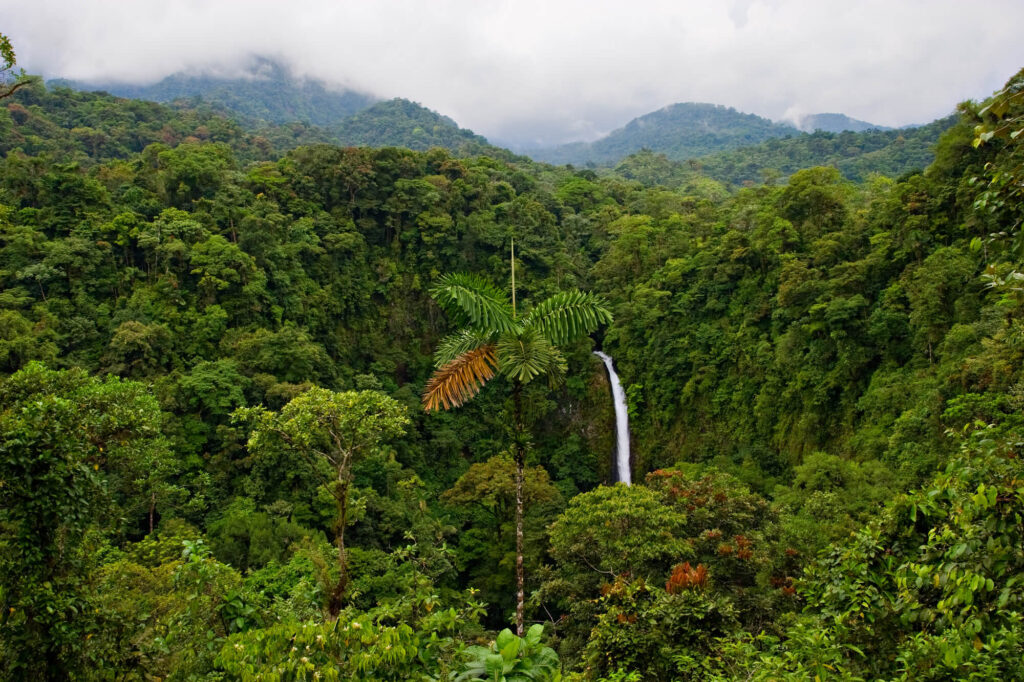 An aerial photograph of a rainforest in Panama. It shows hundreds of trees including a large palm tree. In the background are mountain ranges and low hanging clouds