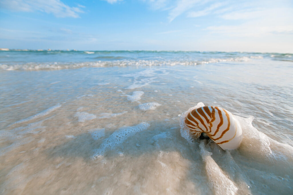An image showing a nautilus shell on white Florida beach with waves lapping over it