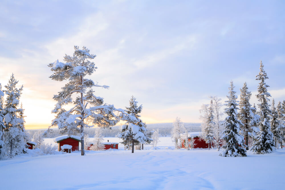 A photo of a snow covered landscape in Sweden. It shows several huge pine trees covered in snow and three red barns