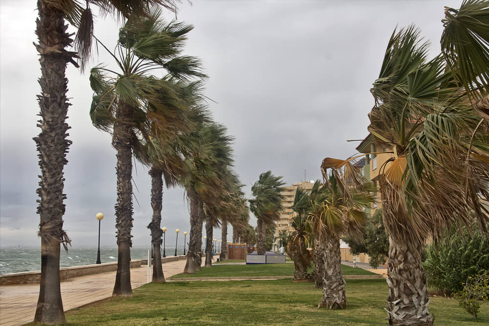 A photo of a beach in Florida during a hurricane. It shows dozens of palm trees which are blown in the wind