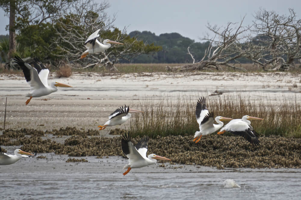A picture of a protected shoreline. Small amount of water up front, sand, marsh grass, and trees towards the back. There are 7 birds flying from left to right, perhaps pelicans.