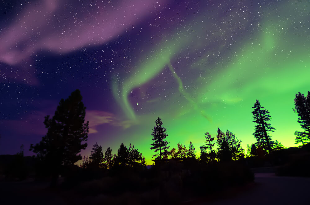 A photo of the Northern Lights. Dark silhouettes of pine trees is in the foreground. A purple sky and stars is on the left of the photo and a yellow-green Norther Lights on the right